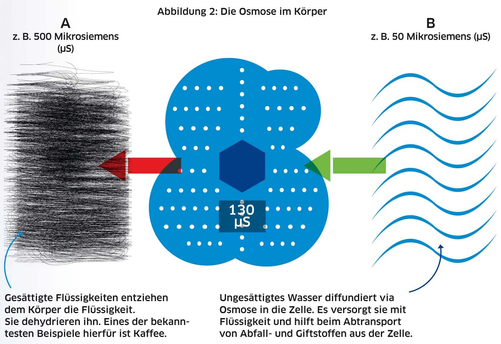 Seite 062-065 Kirner_Wasser.indd